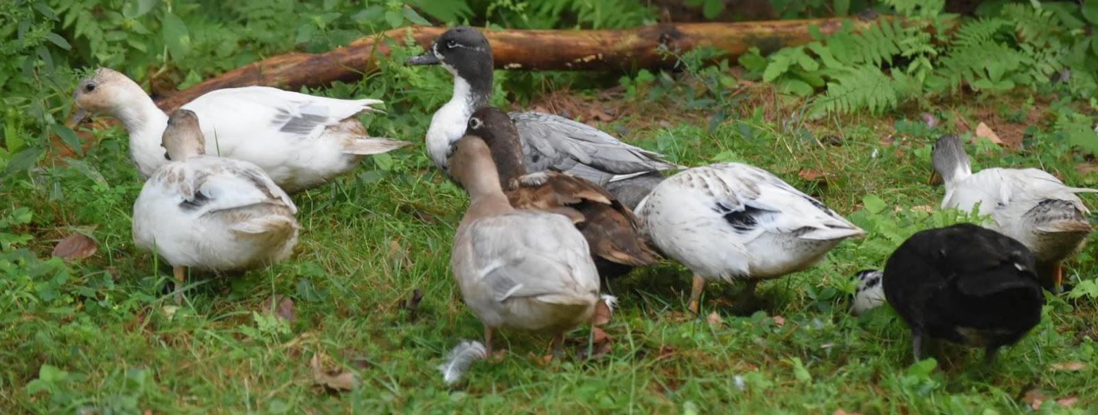 duck cover.JPG