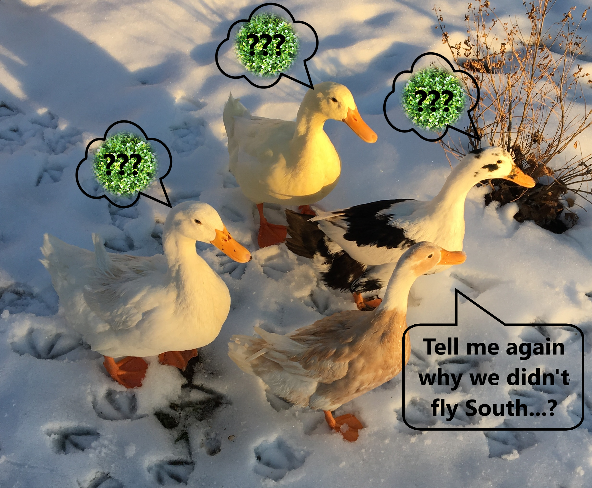 Duck Snow Extra.png
