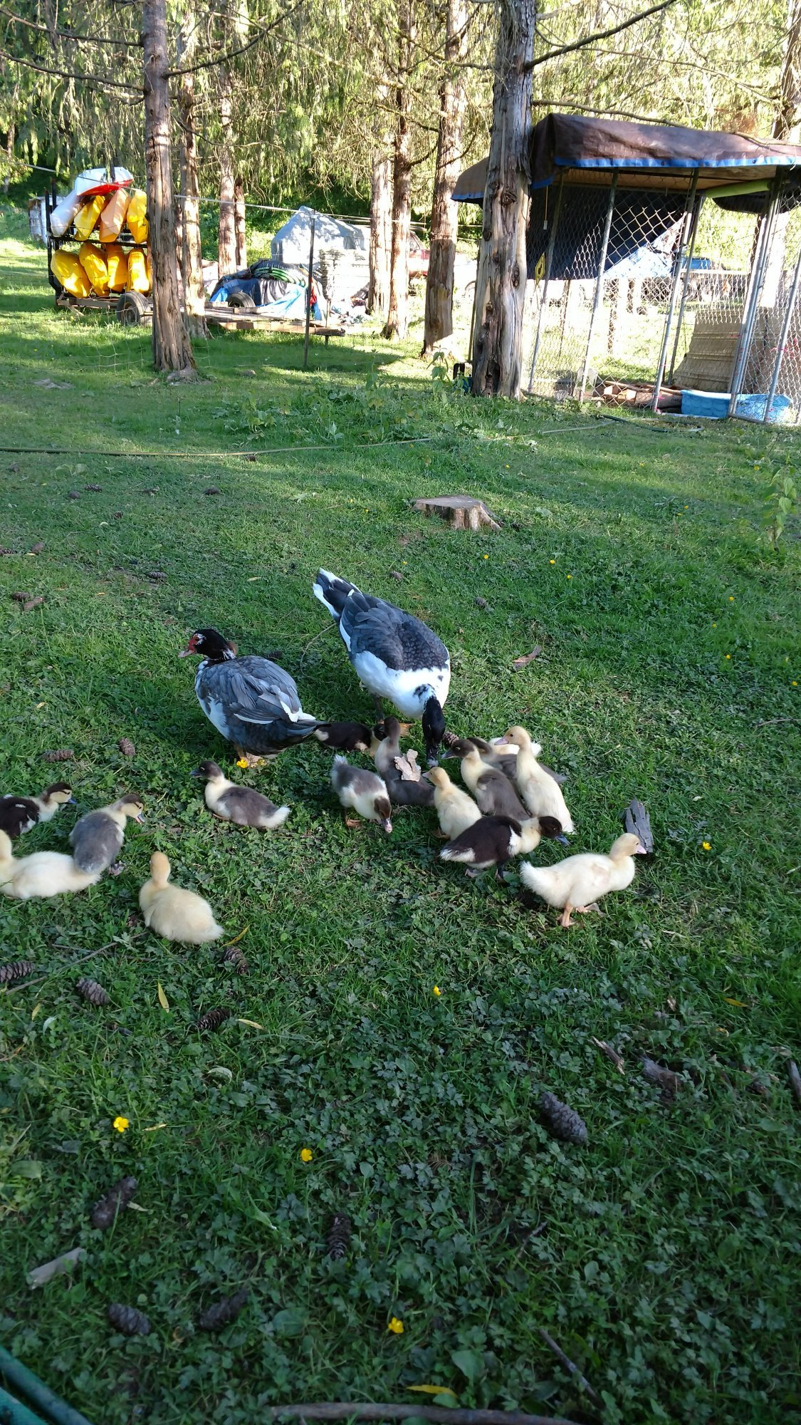 duckpic2.jpg
