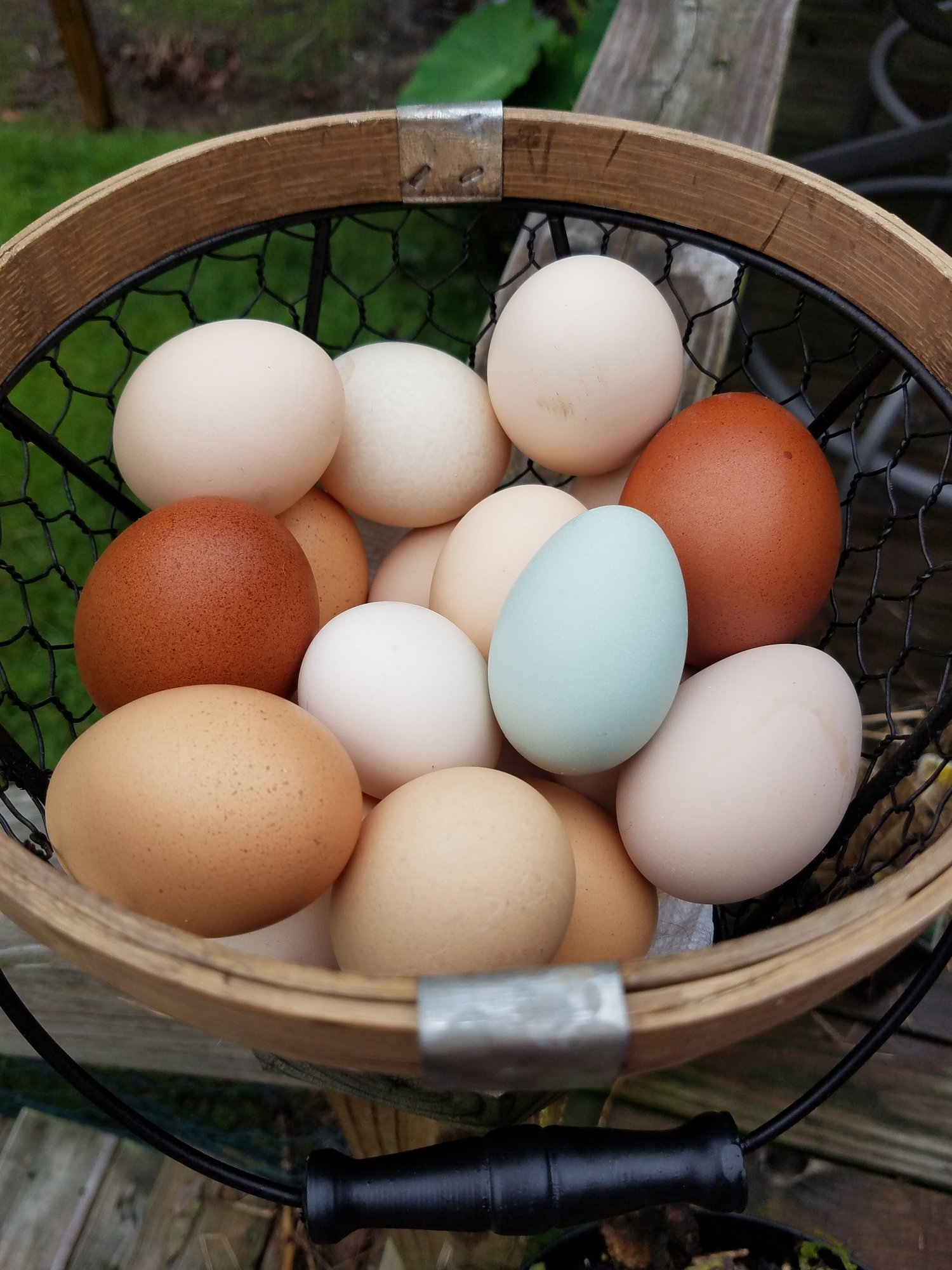 Egg basket 3.jpg
