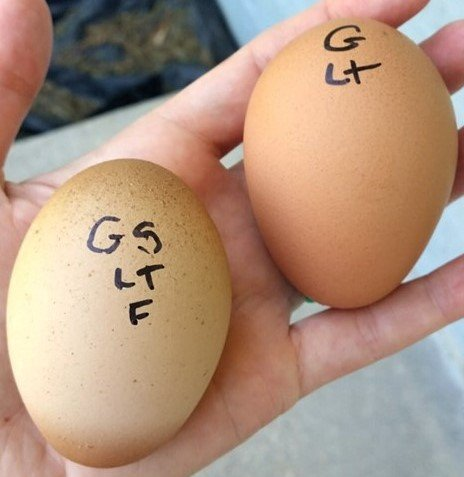 egg comparison copy.jpg