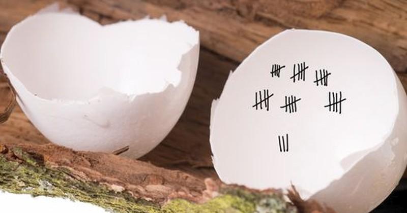 egg-count-hatch-800x420.jpg