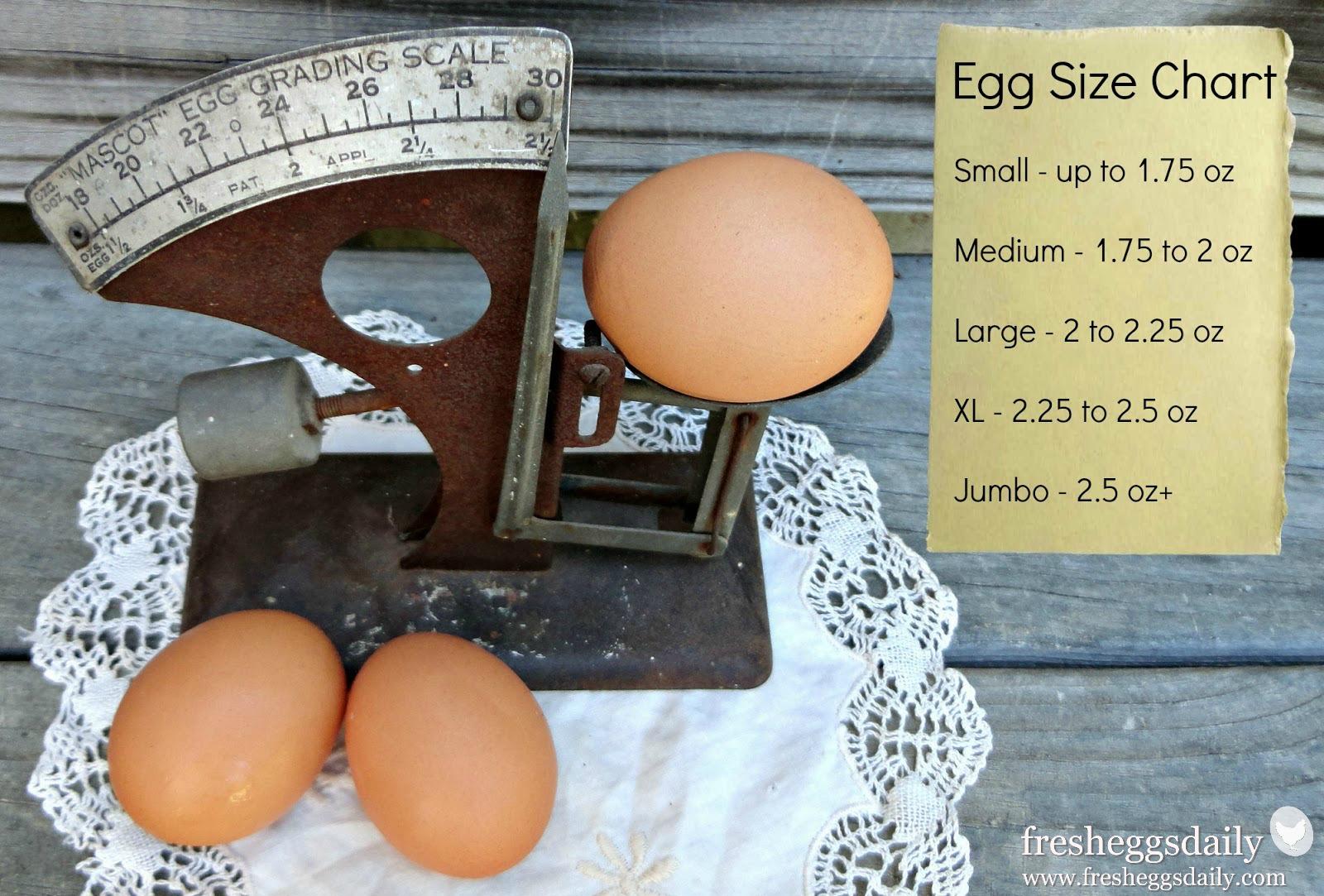 egg-size-chart.jpg