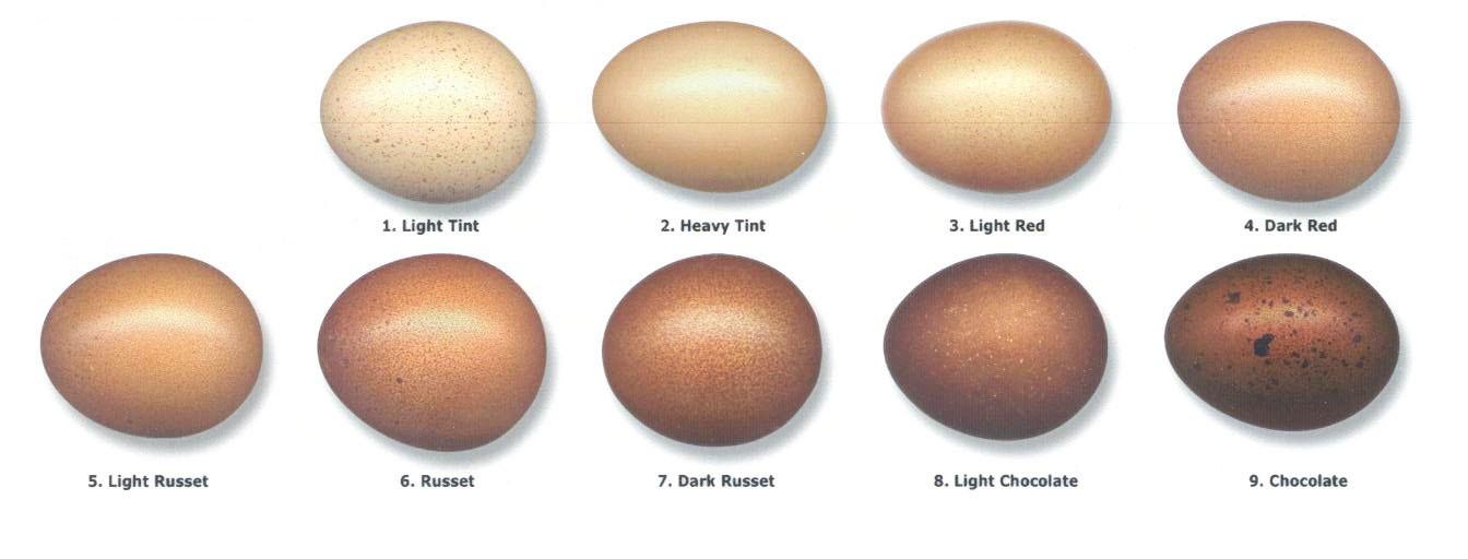 egg_20color_20chart_202_1__2.jpg