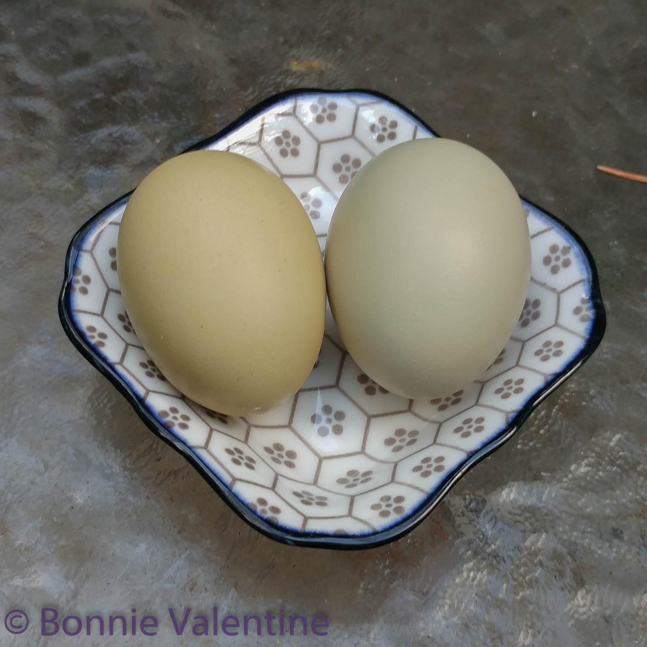 Eggs-073824.jpg