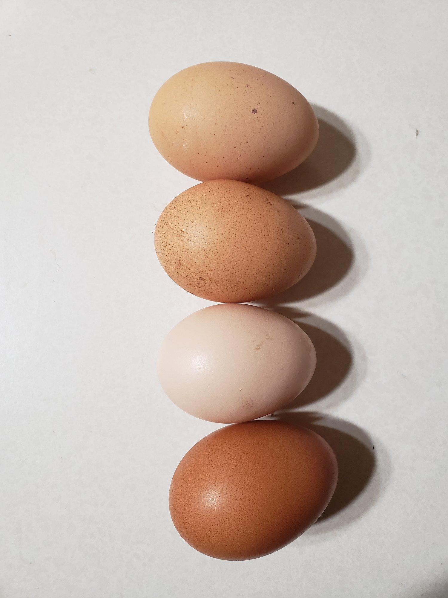 eggs 12-30-18.jpg