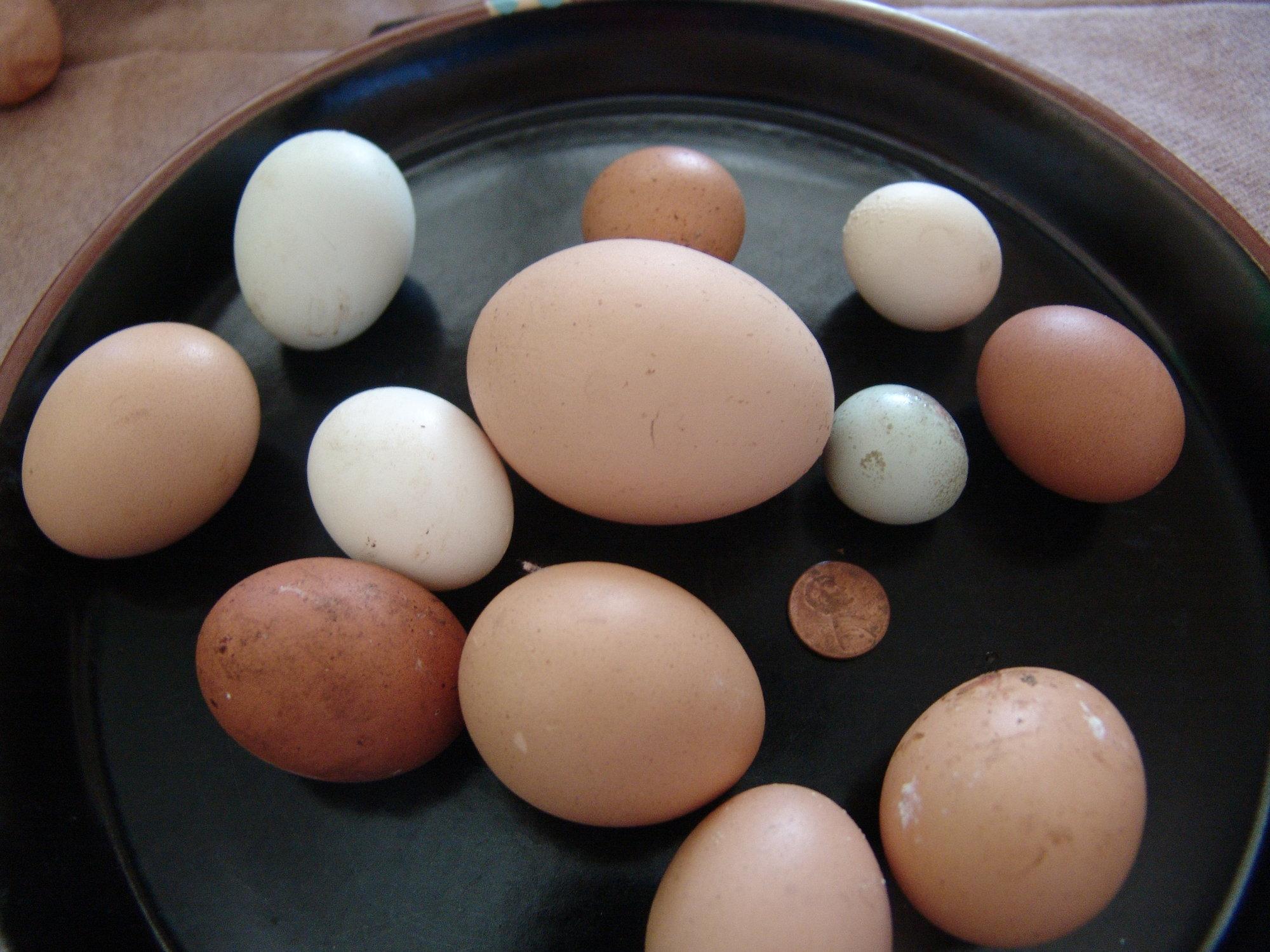eggs (6).JPG