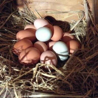 eggs in nest box.jpg