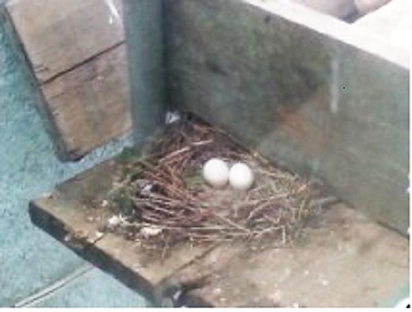 eggs w (2).jpg