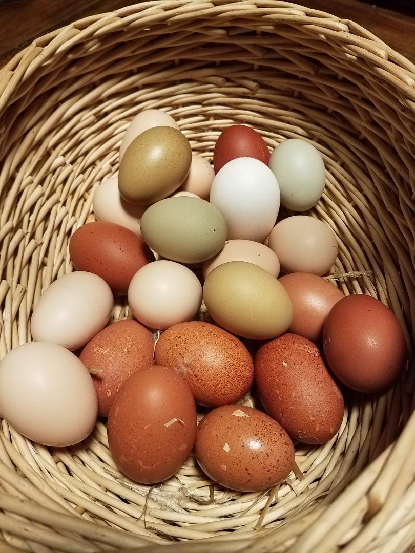 eggs11.jpg