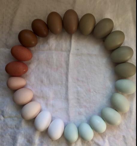 eggsofallcolors.png