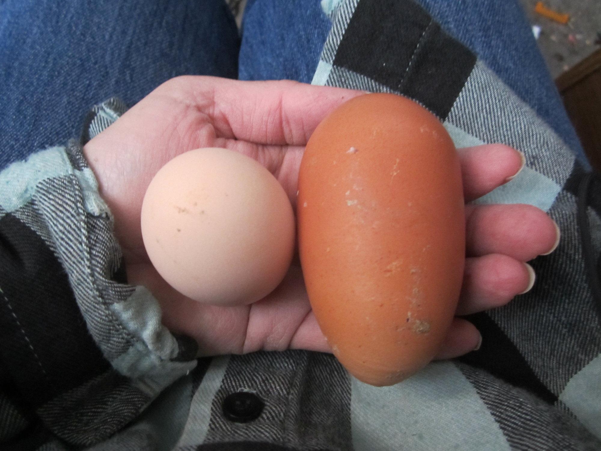 eggtt.jpg
