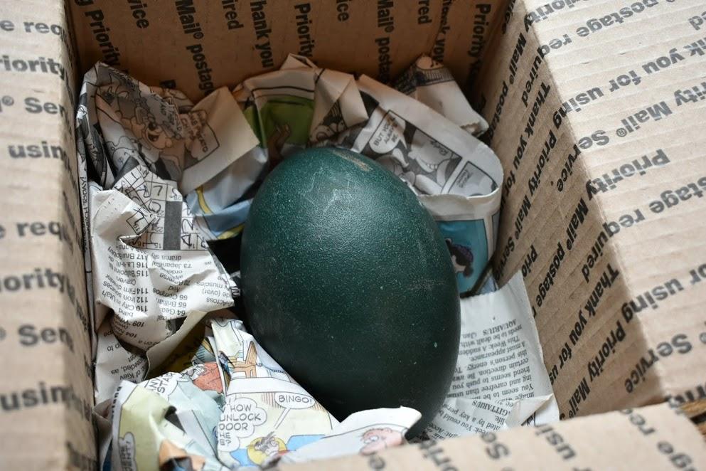 emu egg.JPG