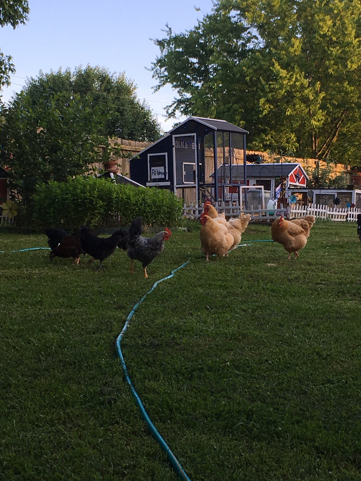 evening with the flock 1.jpg