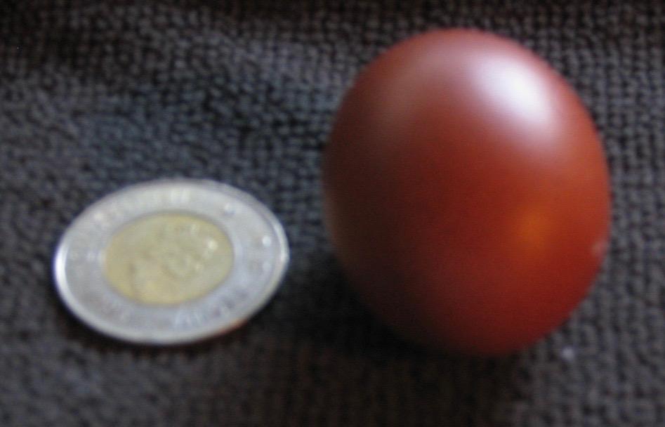 fart egg.jpg