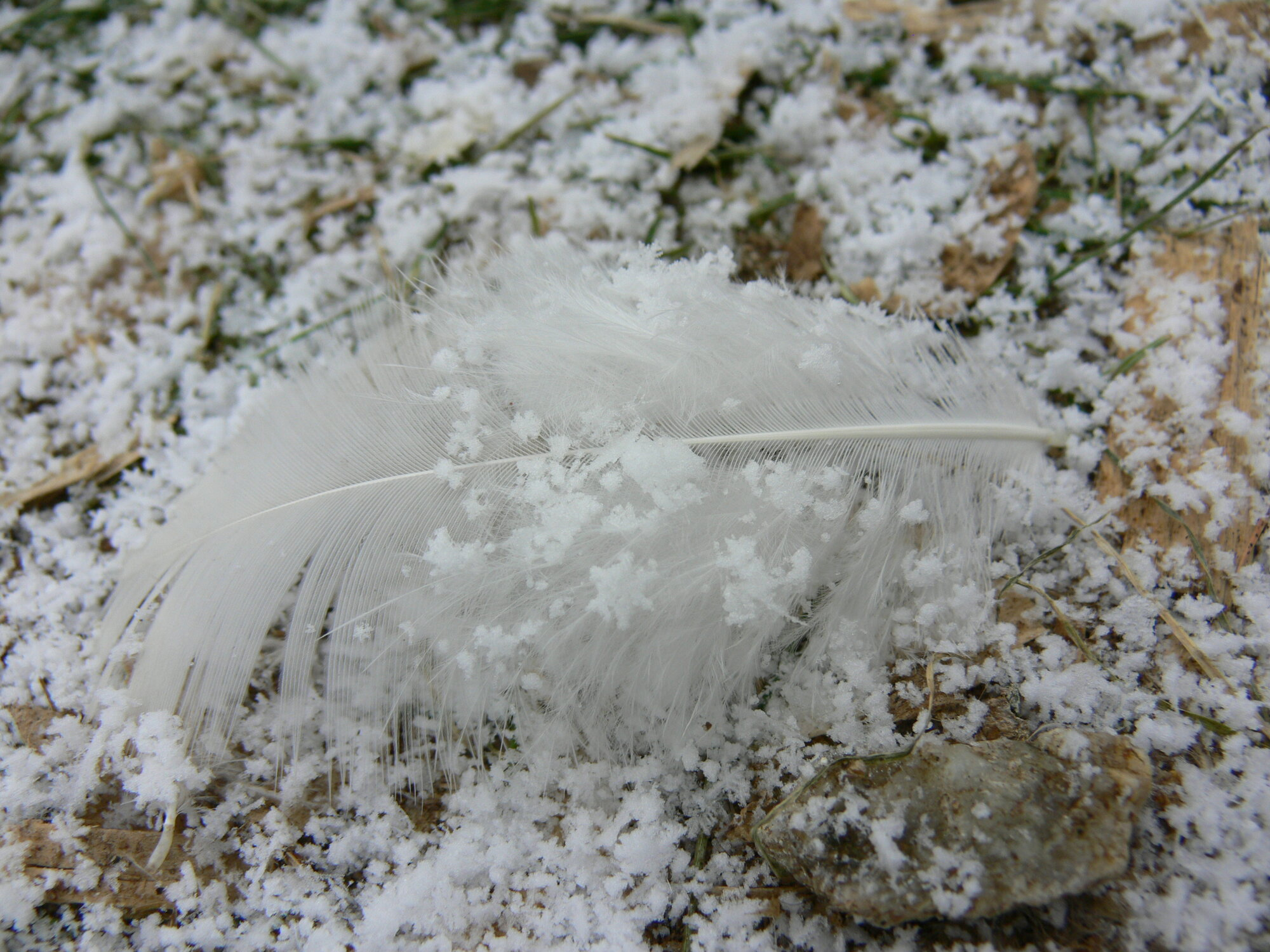 Feather 3.jpg