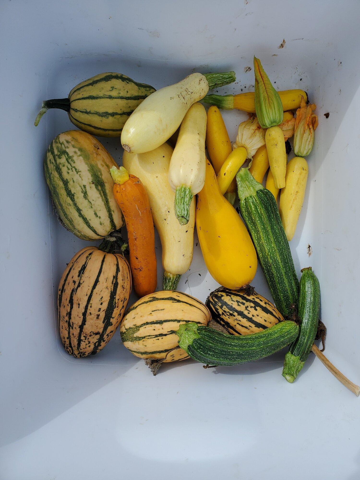 Final zuc harvest 9.23.20.jpg