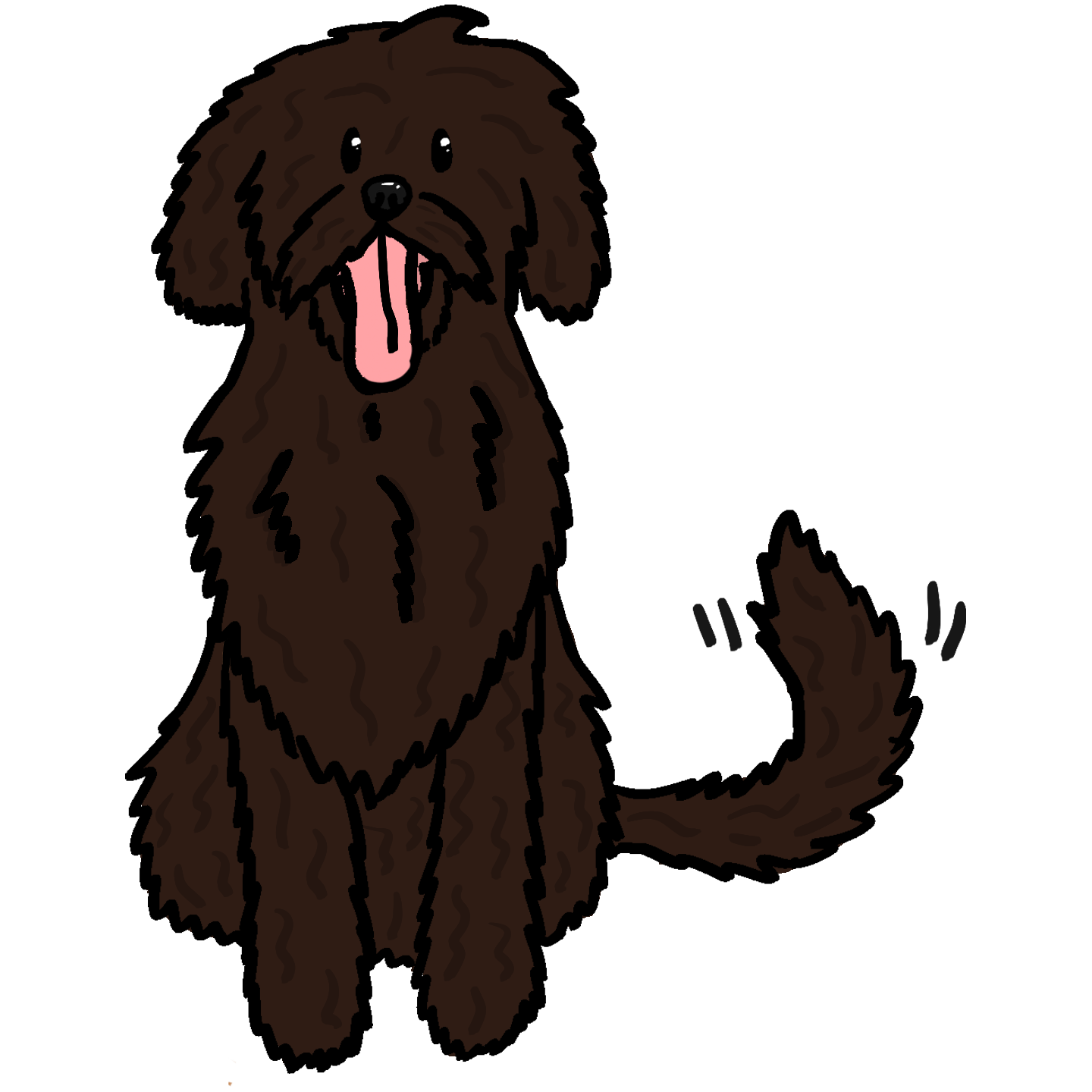 Finished Chocolate Australian Labradoodle.png