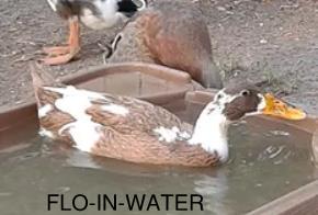 Flo-.jpg