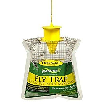 FLY TRAP.jpg
