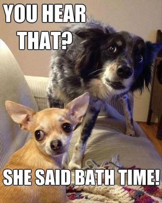 funny-bath-time.jpg