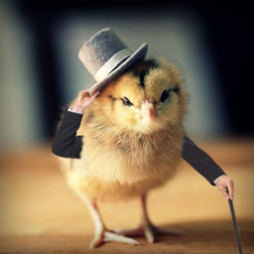 Funny-Chicken-46-1.jpg