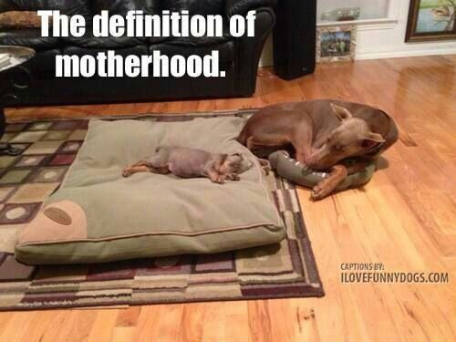 @funny-definition-motherhood.jpg