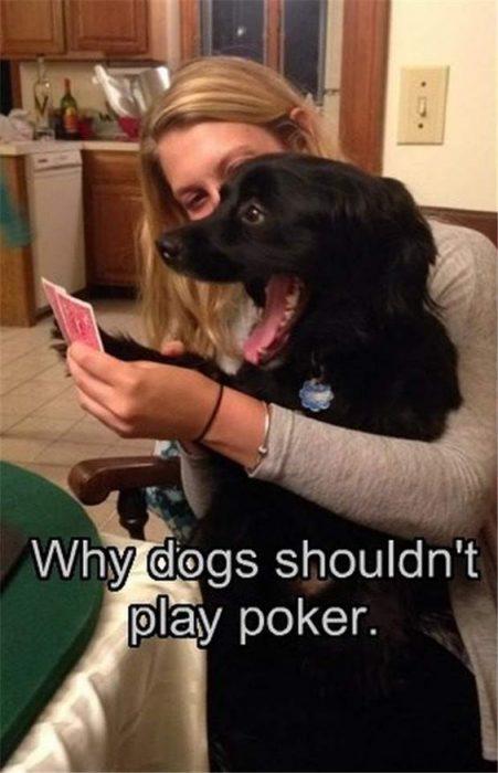 funny-dogs-poker.jpg