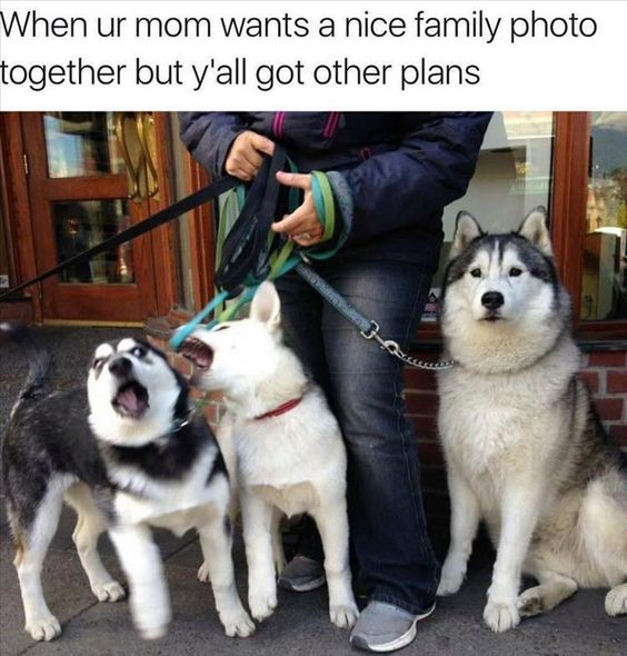 funny-nice-family.jpg