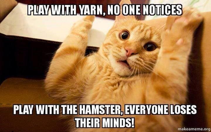 funny-play-with-hamster.jpg