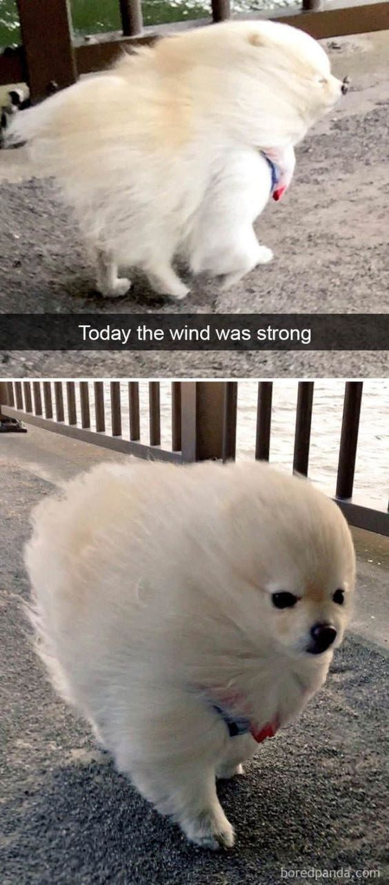 funny-strong-wind.jpg