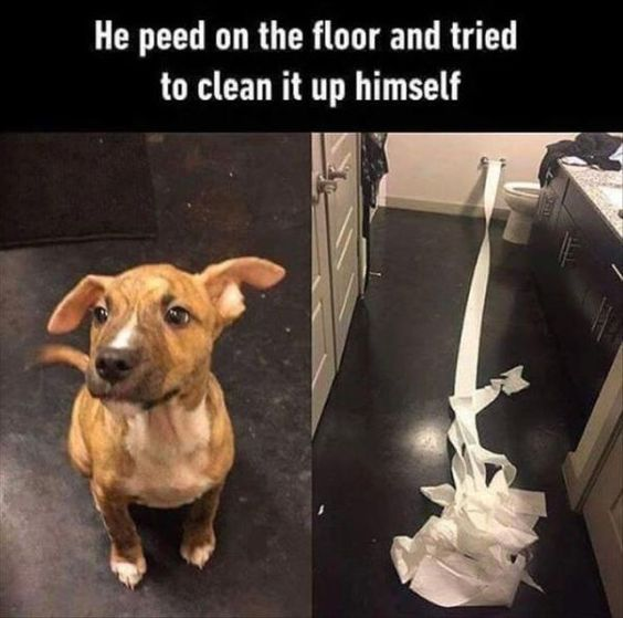 @funny-try-to-clean.jpg