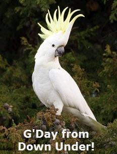 G'Day 9.jpg