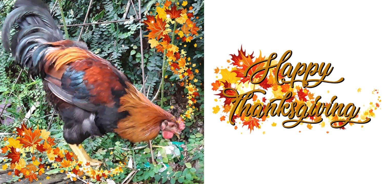 Happy Thanksgiving .jpg