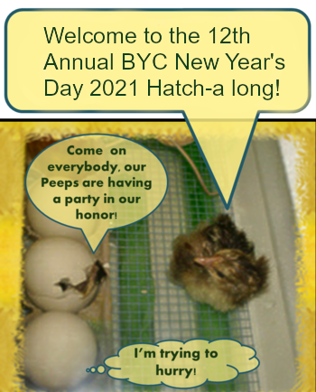 Hatch a long for NYD Welcome.png