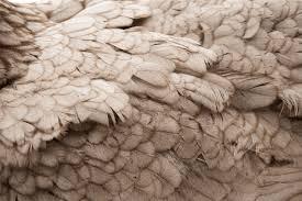 hen feathers.jpg