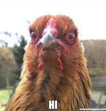 hi chicken.jpg