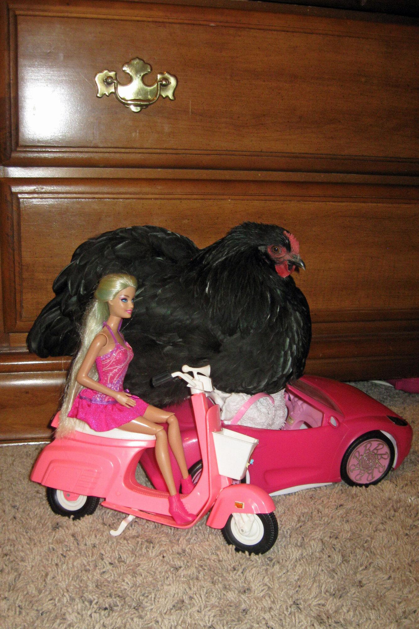 hot chicks in cars.jpg