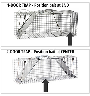 How to Trap_Weasels-bait-positions.png