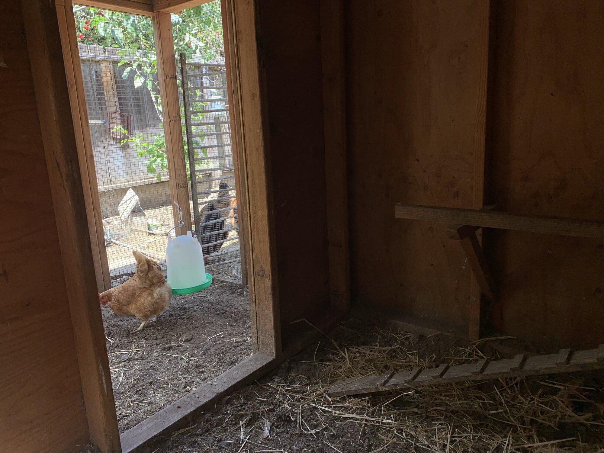 inside coop.jpg