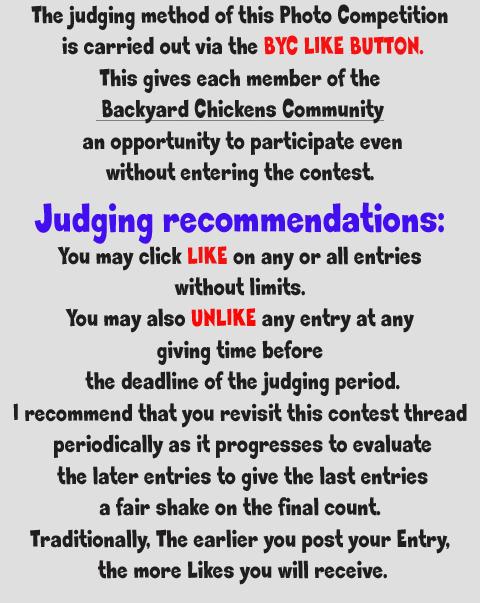 judging reccomendation cropped.jpg
