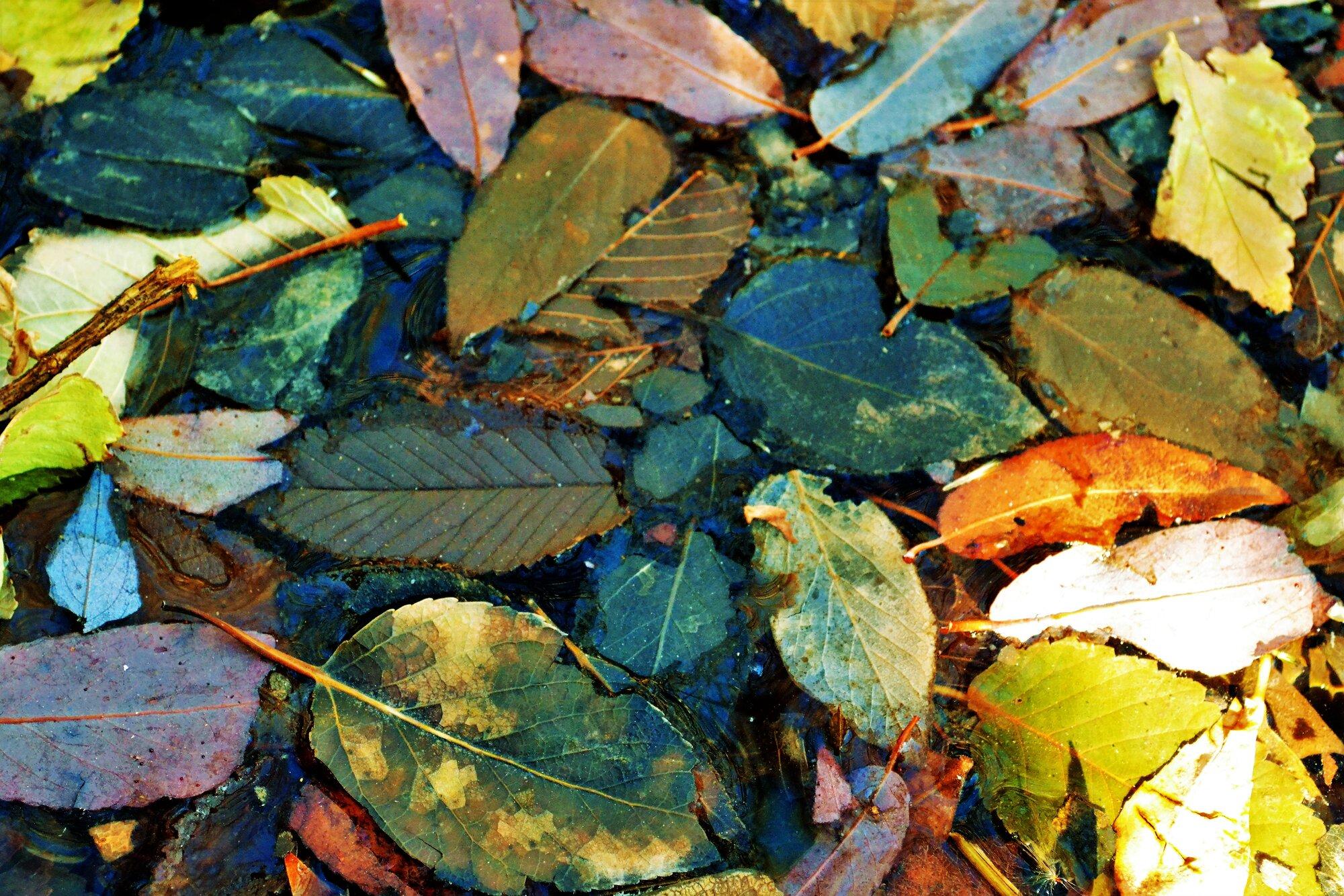 leaves in water1.jpg