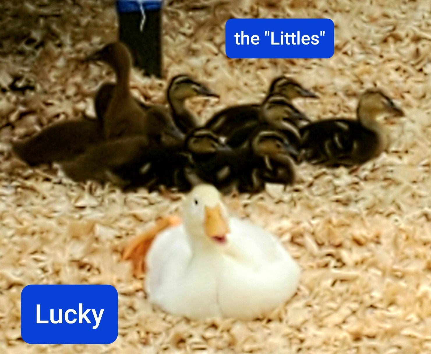 LuckyLittles.jpg