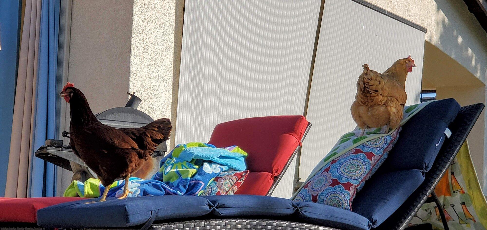 Lucy and Rhoda sunbathing.jpg