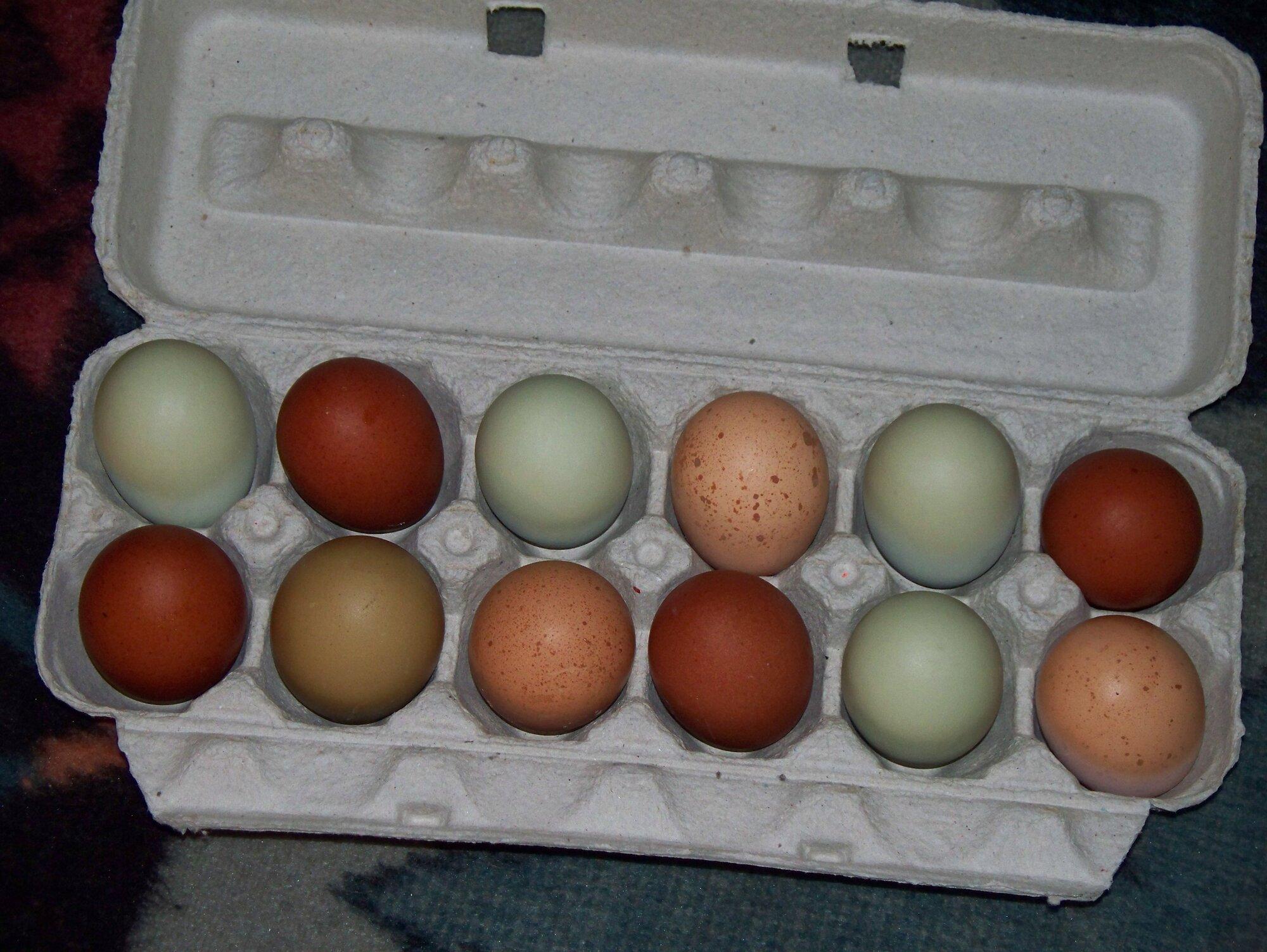My Eggs.jpg