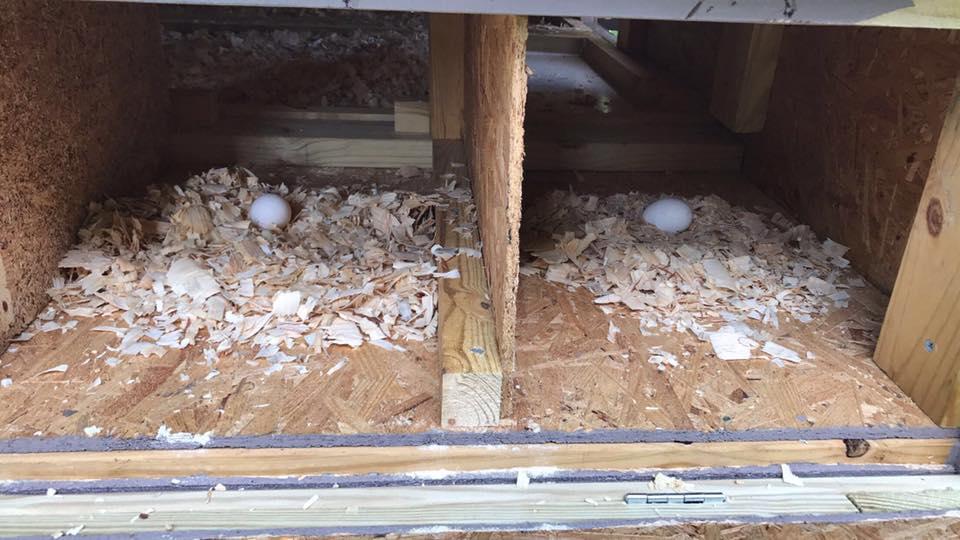 Nesting Box.jpg