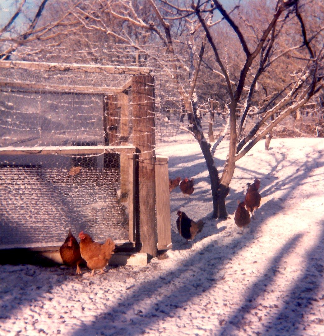 newhouse-winter-1 copy.jpg