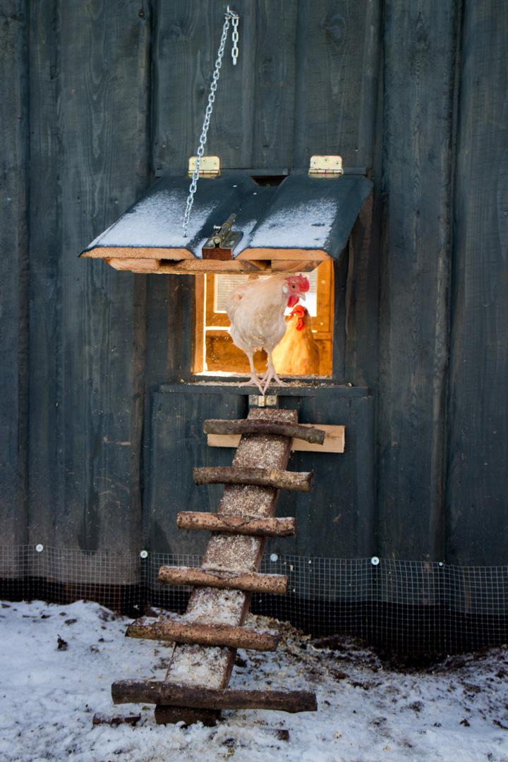 NorwegianCoop-36.jpg