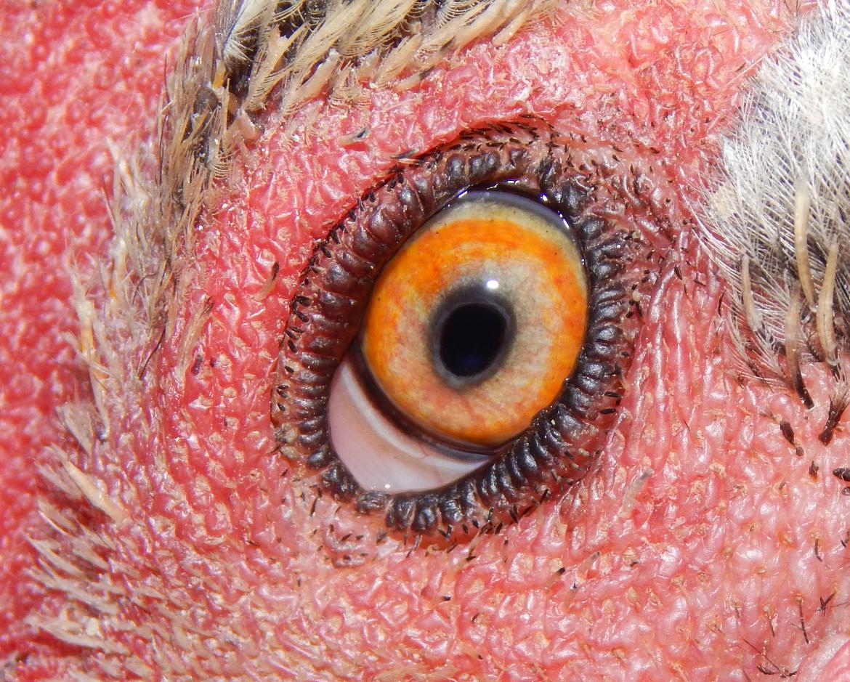 ocular_6.png