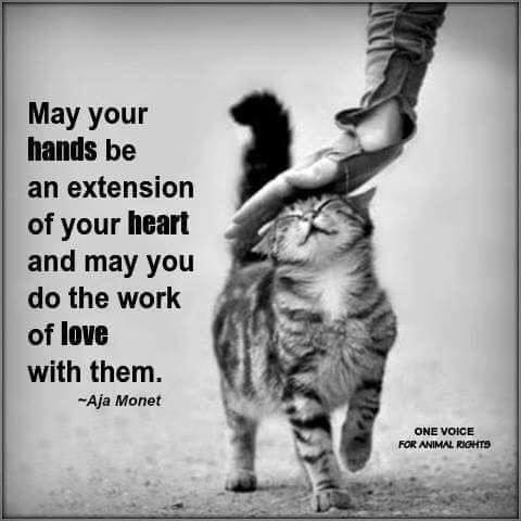 of-your-heart-and-may-you-do-the-work-of-love-with-them-aja-monet-quote-one-voice-for-animal-r...jpg